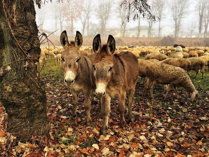 Donkey di nickfor