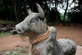 Photo: Year 2 Day 44 -  Cow Buddha at Phnom Bakheng