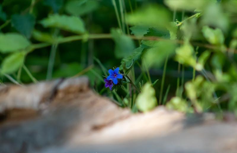 May Flower di alessandra_frankini