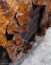 Photo: Tree fungus