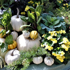 by Denise O'Hern - Nature Up Close Gardens & Produce