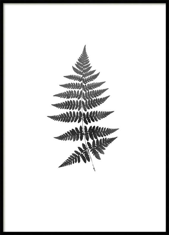 Fern watercolor Poster black