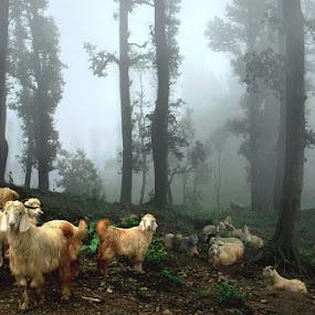Our Place by Kaushik Dolui - Landscapes Travel