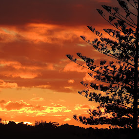 Kingscliff Sunset by Di Mc - Novices Only Landscapes ( orange, sky, tree, sunset, silhouettes, burn, glow, sun,  )