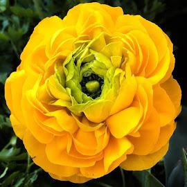 by Judy Friedman - Flowers Single Flower