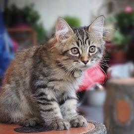 by Iwan Ramawan - Animals - Cats Playing