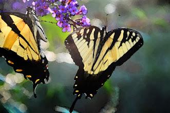 Photo: Watercolor (3/0/1) - butterflies on butterfly bush
