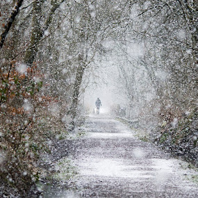 by Vincent Yates - Landscapes Forests ( figure, pathway, beautiful, snow, trees,  )