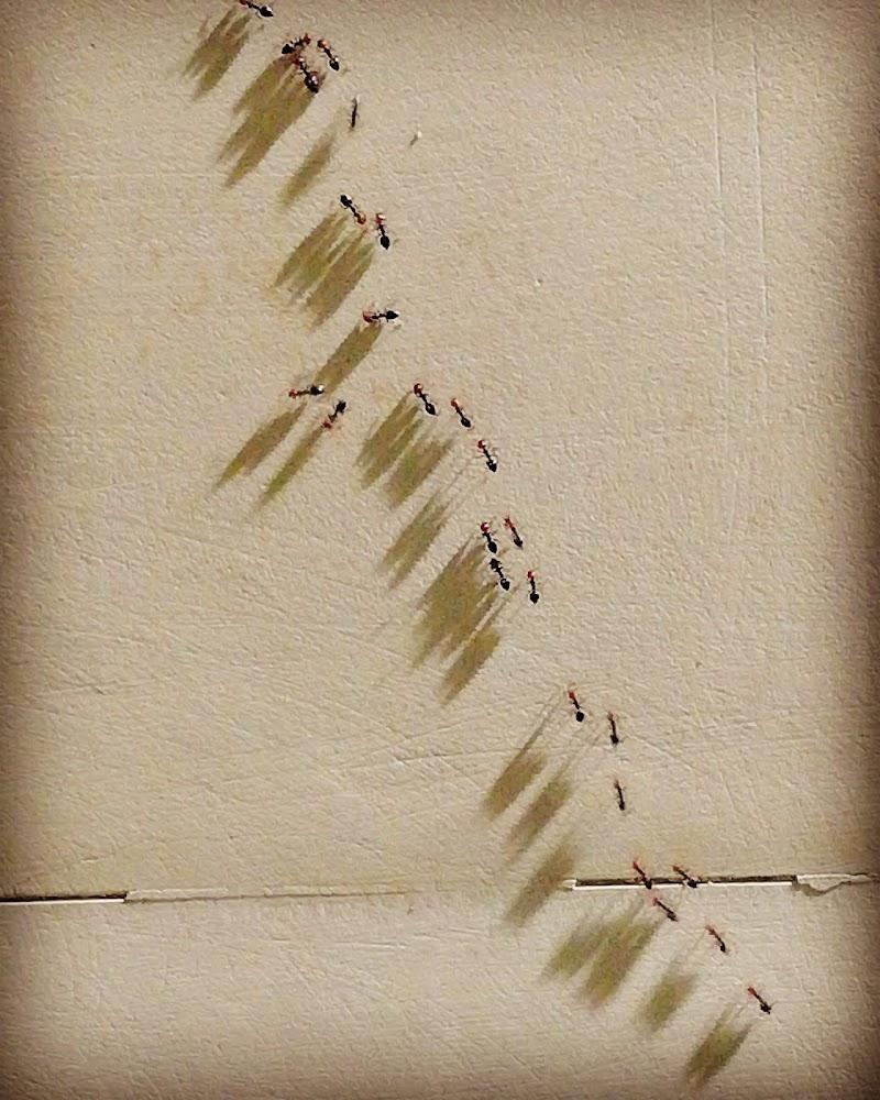 Piccole ombre di fusaromiki