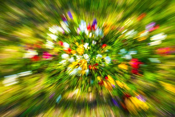 Zoom sulla Primavera di Salvatore Gulino