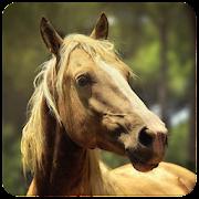 Horses memory game - beautiful photos of horses