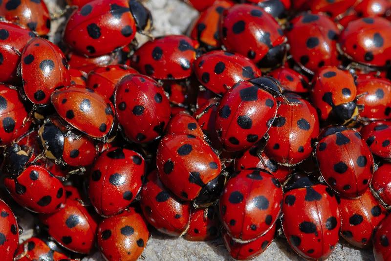 """""""le signore in rosso"""" di renato_cerretani"""