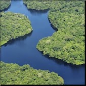 Amazon Rainforest wallpaper