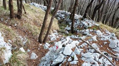 Photo: v gozdu so še ostanki strelskih jarkov