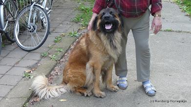 Photo: Seit 25.9.2008 lebt Lennox im Land Brandenurg  - 22.7.2009