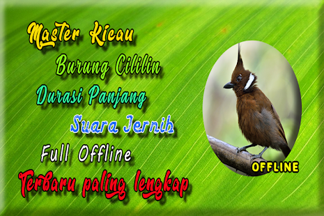 Masteran Cililin Durasi Panjang MP3 - náhled