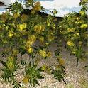 Cannabis 3D Plantation