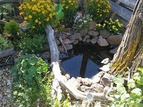 Photo: water feature/bug habitat coming along