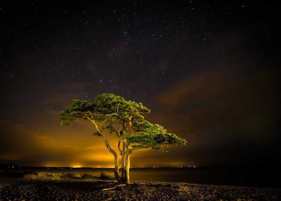 by Jocke Mårtensson - Nature Up Close Trees & Bushes (  )