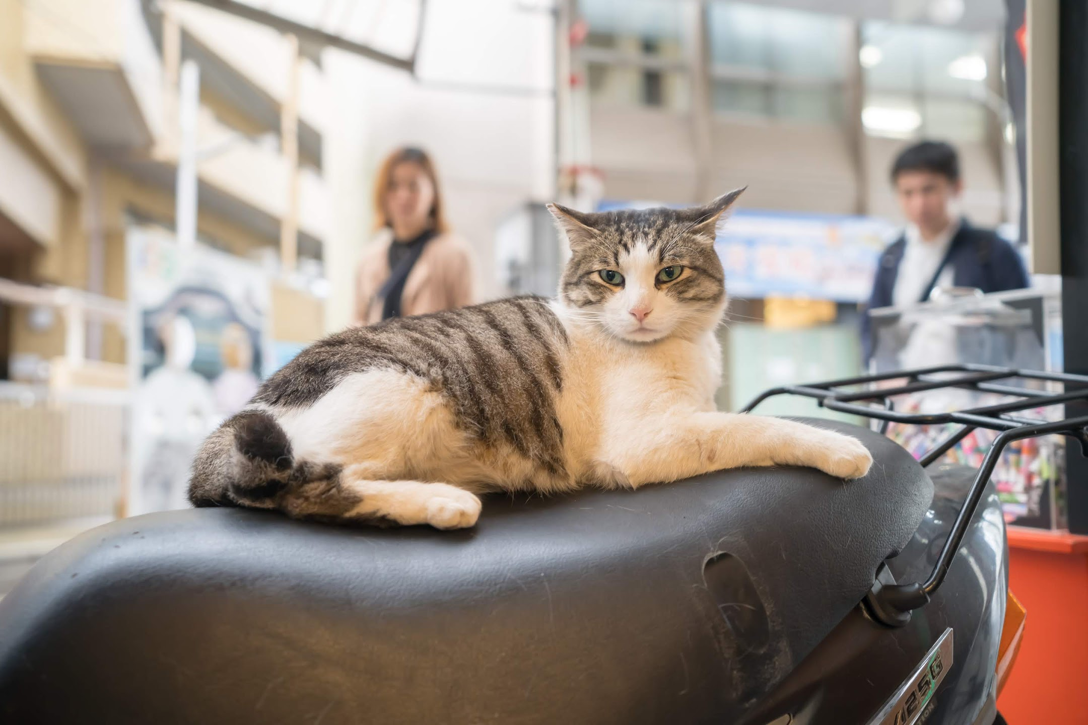 道後商店街 道後ハイカラ通り 猫3