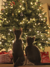 Photo: Kittens First Christmas