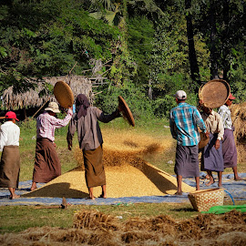 rice drying by Łukasz Sowiński - People Professional People ( countryside, birma, myanmar, village, rice, mandalay )