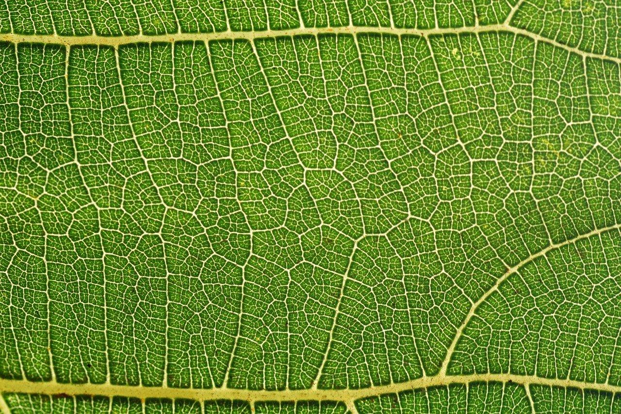 detailed photo of green leaf
