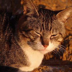 At the rocks by Elenka Smilenova - Animals - Cats Portraits ( cats animal portrait,  )