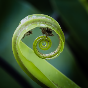 The Nature, The Green by Jane Helle - Nature Up Close Leaves & Grasses ( plant, life, nature, green, still, leaf, spiral )