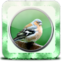 Bird Ringtones HD icon