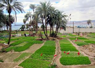 Photo: Rannalla oli paljon viljelypalstoja - toisella rannalla Eilat