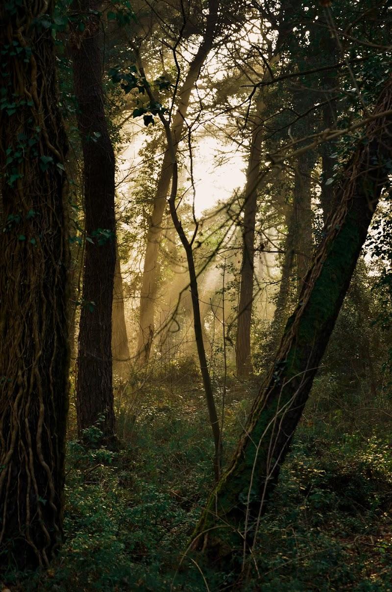 Il bosco era scuro l'erba già verde (Sally) di Gianni.Saiani  Photos