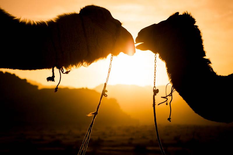 Camel silhouette di fedevphoto