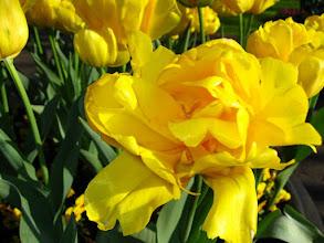 Photo: #017-Le parc floral du Keukenhof.