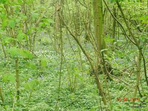 Photo: de hyacinten zijn er