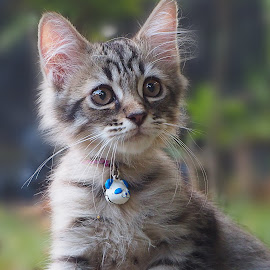 Marko by Iwan Ramawan - Animals - Cats Kittens (  )