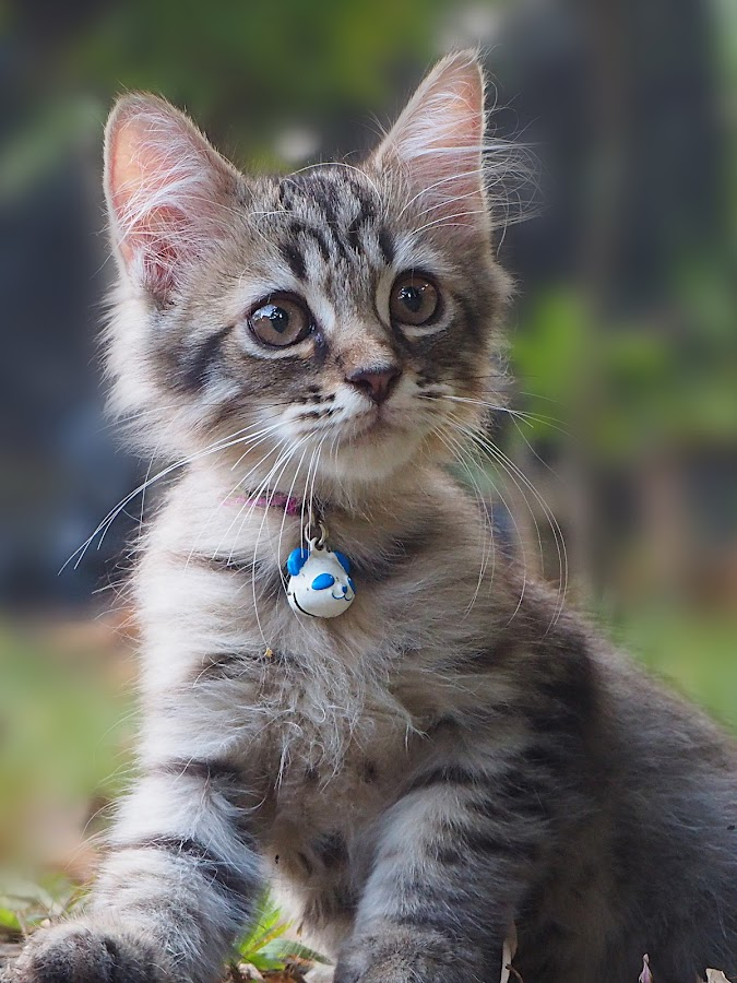 Marko by Iwan Ramawan - Animals - Cats Kittens (  )