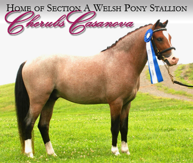 Crying Coyote Farm - Sport Horses For Sale - Sparkleberry Home