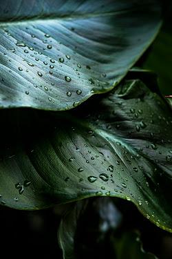 .. Leaf ...
