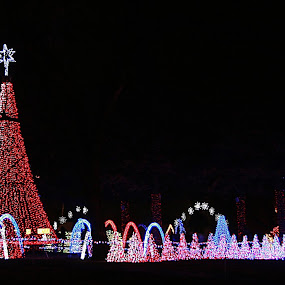 Dancing Christmas Lights by Jerry Ehlers - Public Holidays Christmas ( lights, broken arrow, rhema bible school, oklahoma, christmas, display,  )