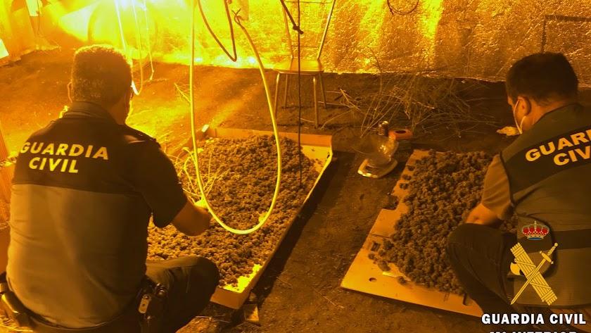 Marihuana encontrada por la Guardia Civil.