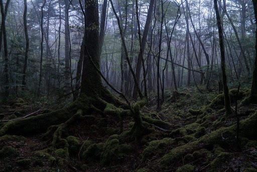 El bosque de los suicidas en Japon