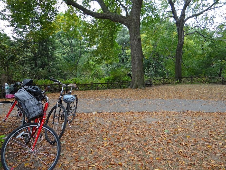 Bikes alugadas