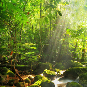 201210261034 Light From Heaven by Steven De Siow - Landscapes Forests ( stream, sun ray, nature, green, forest, , Earth, Light, Landscapes, Views )