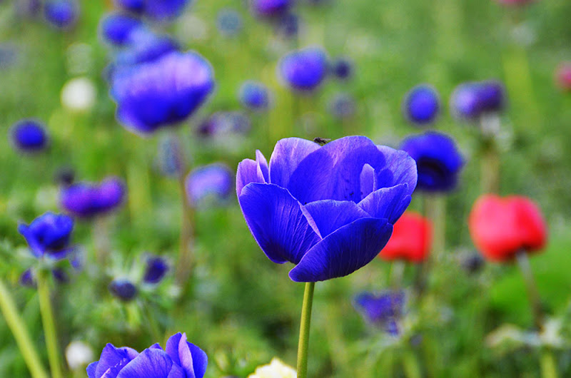 Blue flower give power di gina_todisco