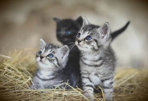 Kittens Litter Training - 5 Steps to Success