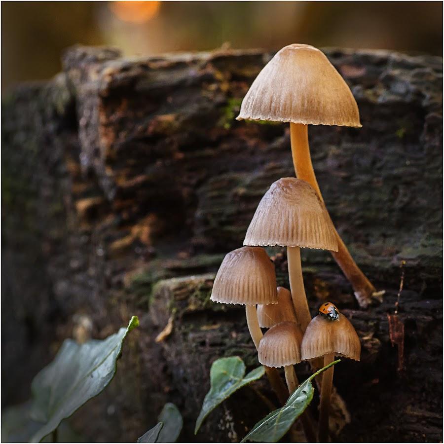 Woodland Fungi by Mark Shoesmith - Nature Up Close Mushrooms & Fungi ( macro, fungi, ladybird, woodland, leaves,  )