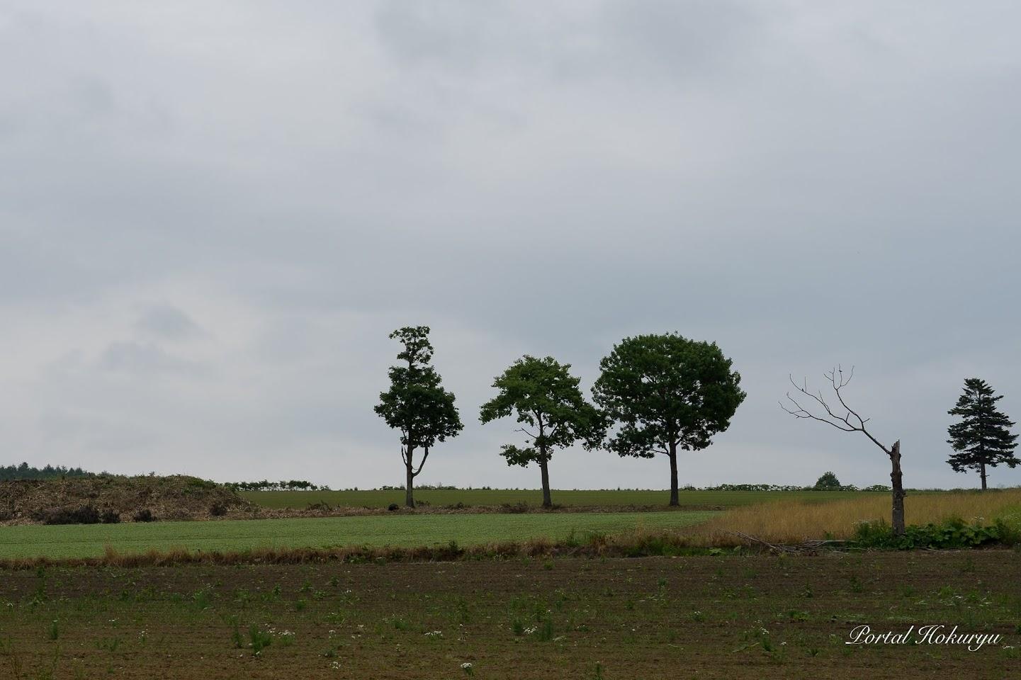 3兄弟の木