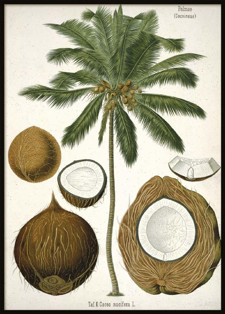 Vintage Cocos, Poster