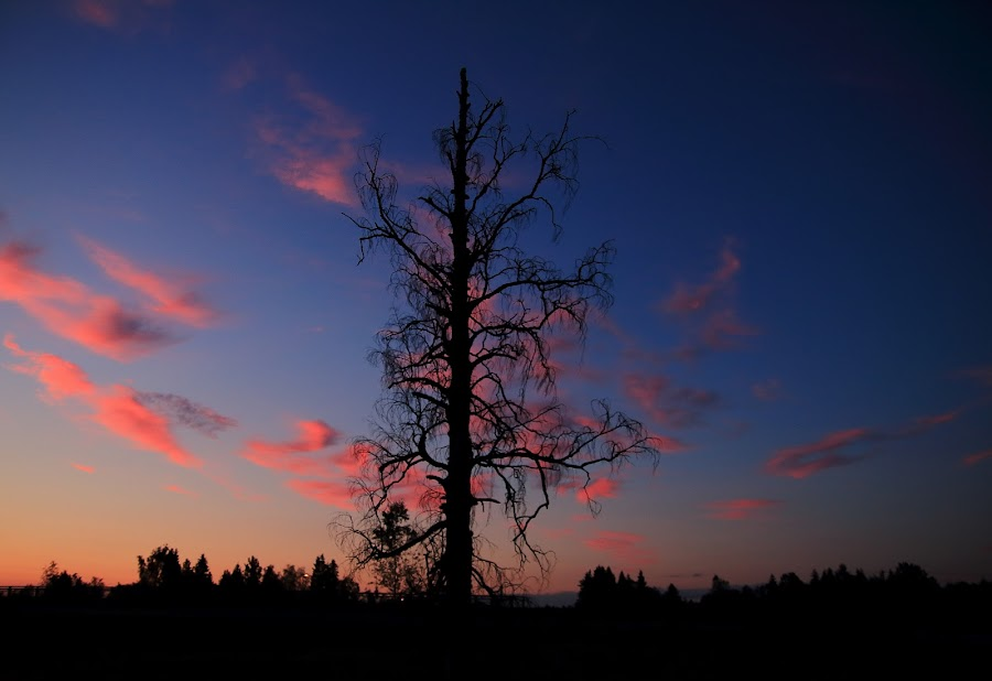 even Visent wood is beautiful in sunset by Mona Martinsen - Nature Up Close Trees & Bushes
